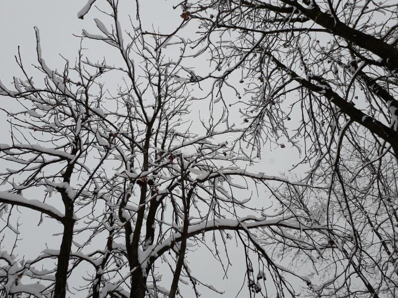 树在冬天,塞尔维亚 图库摄影