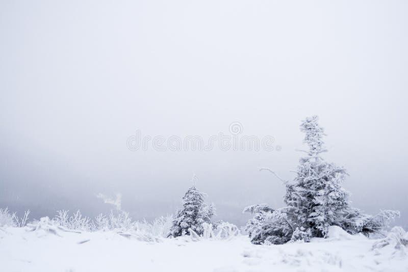 树在冬天 库存图片