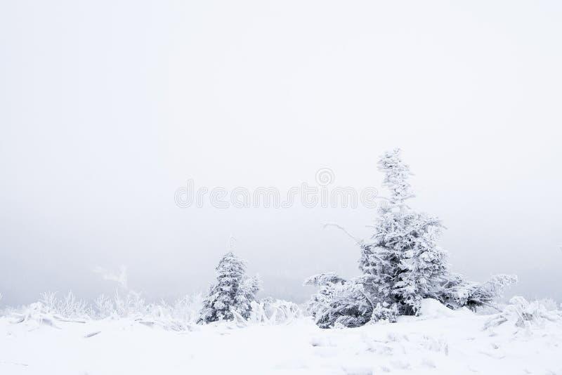 树在冬天 库存照片