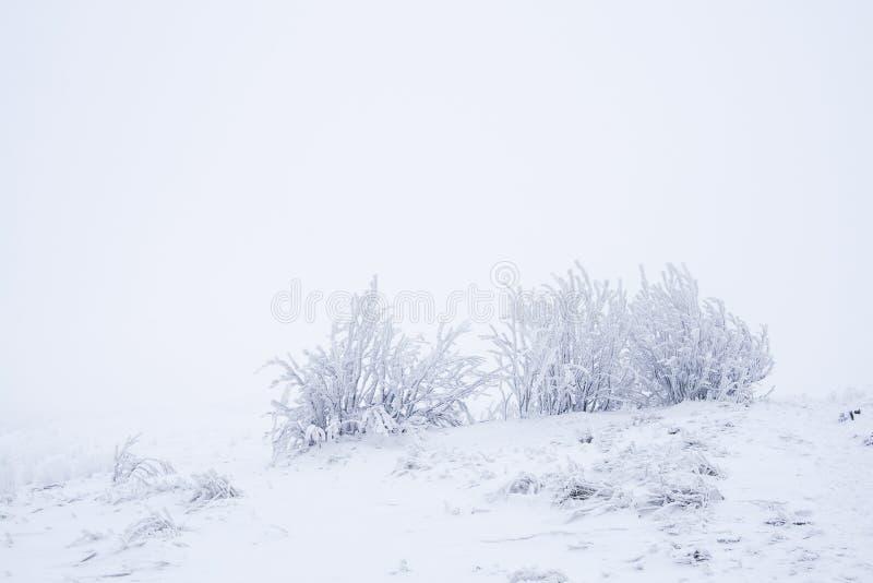 树在冬天 图库摄影