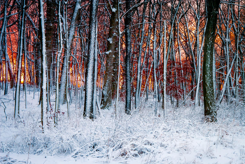 树在冬天3 免版税库存照片