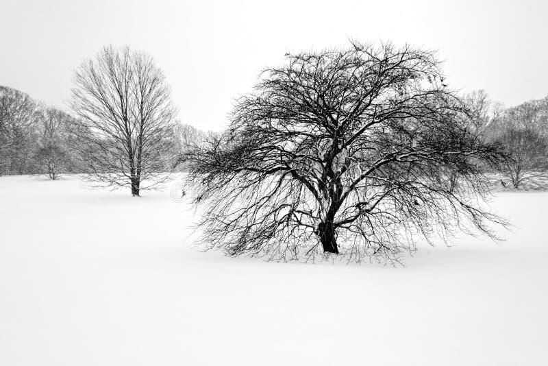 树在冬天1 免版税库存照片