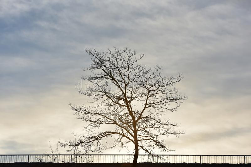 树在冬日 免版税库存图片