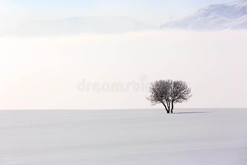 树在冬时的软,平静的环境里 库存照片
