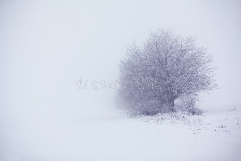 树在冷的冬天 库存照片