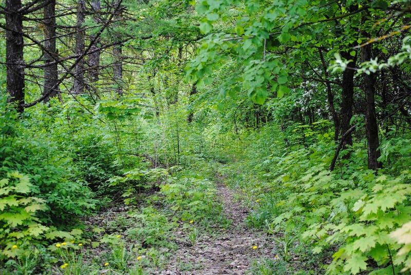 树在夏天森林里 免版税库存图片