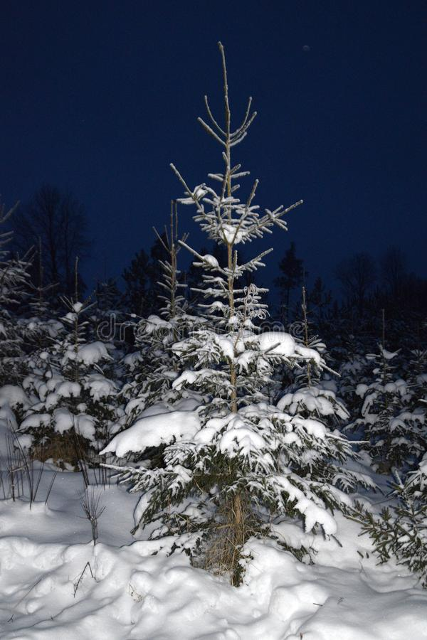 树在多雪的冬天夜 库存照片