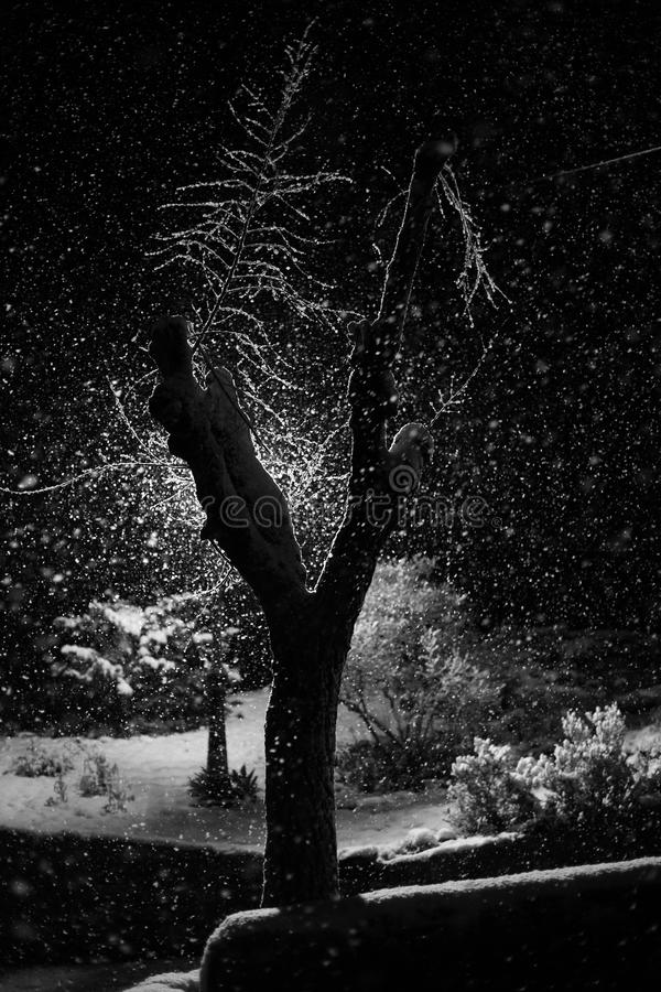 树在多雪的夜 免版税库存照片