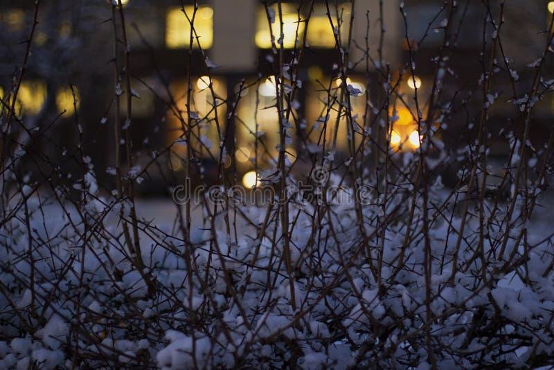 树在夜在背景中点燃,强光 库存图片