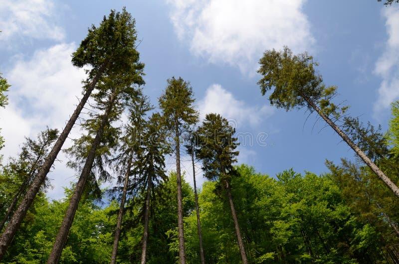 树在山森林里 免版税库存图片