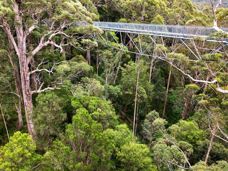 树在巨人的谷的上面步行看法在Walpole-Nornalu的 库存照片