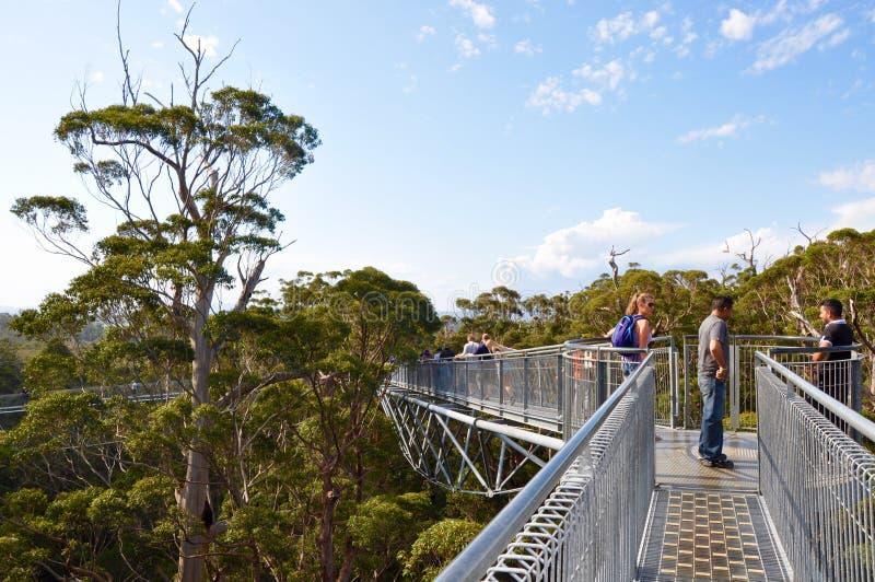 树在巨人的谷的上面步行:丹麦,西澳州 库存照片