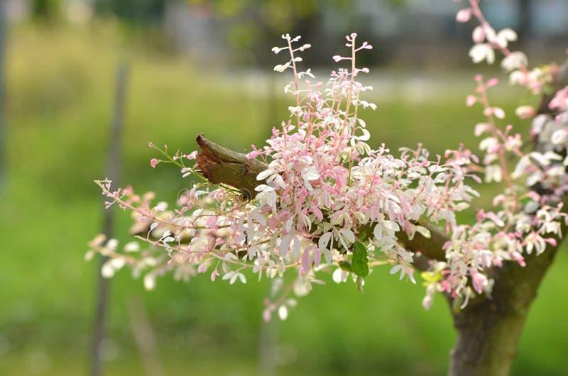 树在庭院里 免版税库存图片