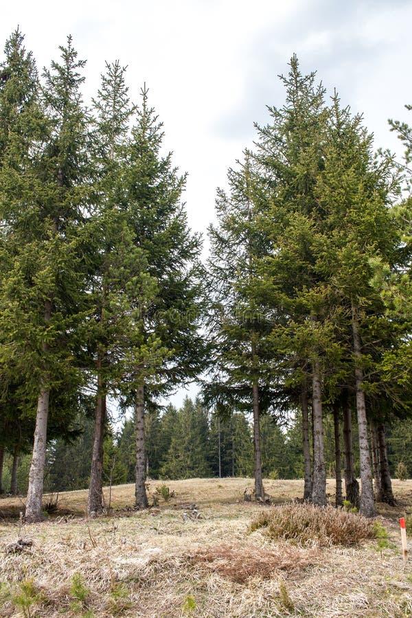 树在形成一条自然供徒步旅行的小道的森林里 免版税图库摄影