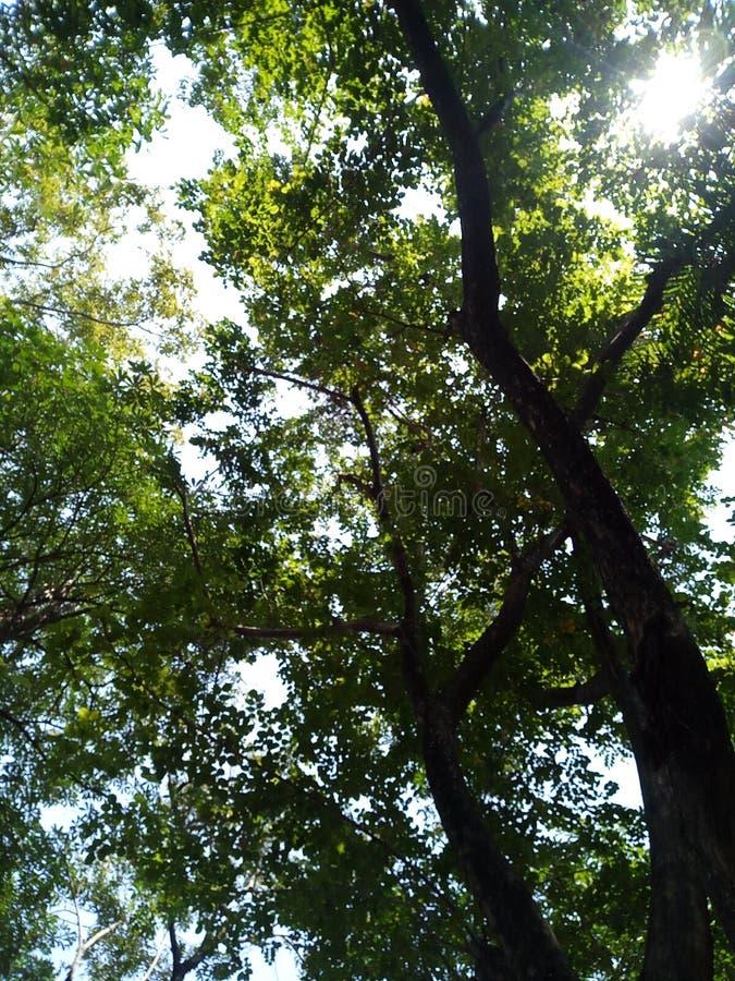 树在我的学校 图库摄影