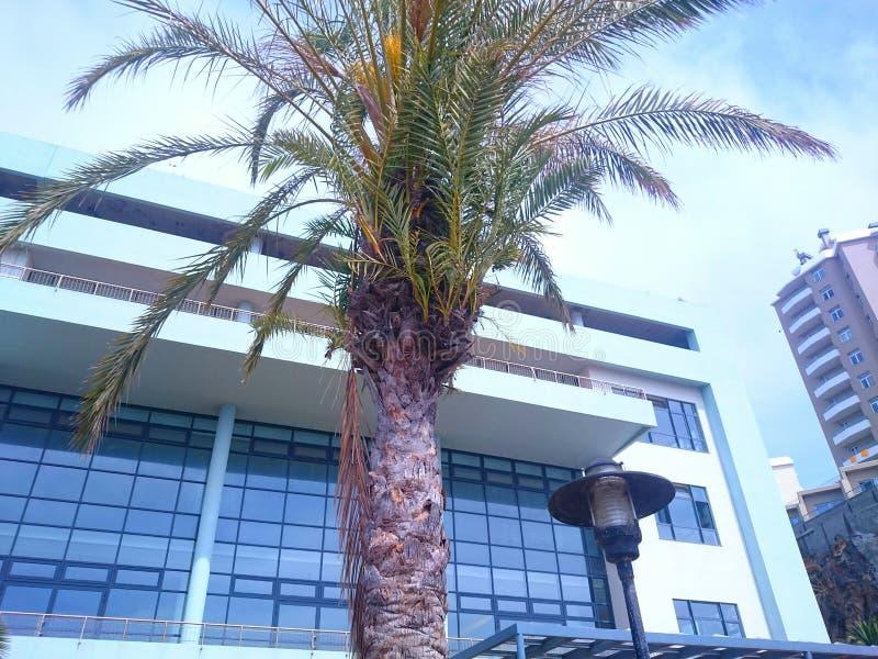 树在旅馆里 免版税库存照片