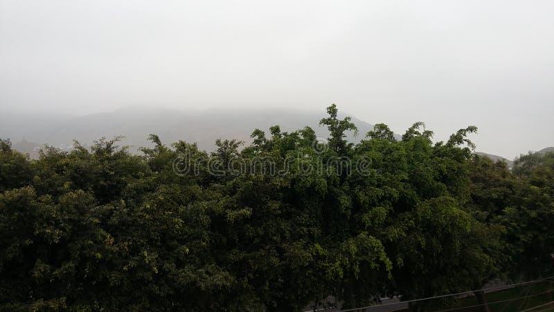 树在早晨 免版税库存照片