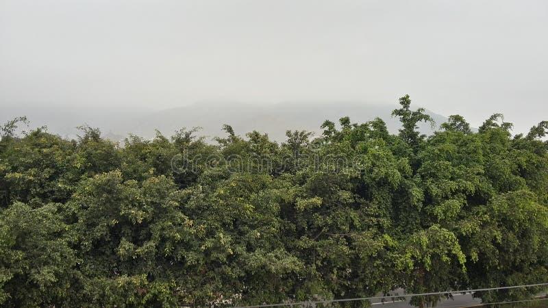 树在早晨 免版税库存图片