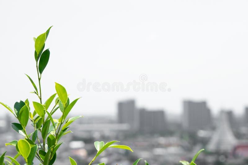 树在有拷贝空间的城市 自然和环境 库存图片
