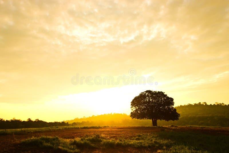 树在有日出和宽天空的草甸 免版税库存图片