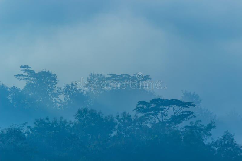 树在有薄雾的早晨 免版税库存图片