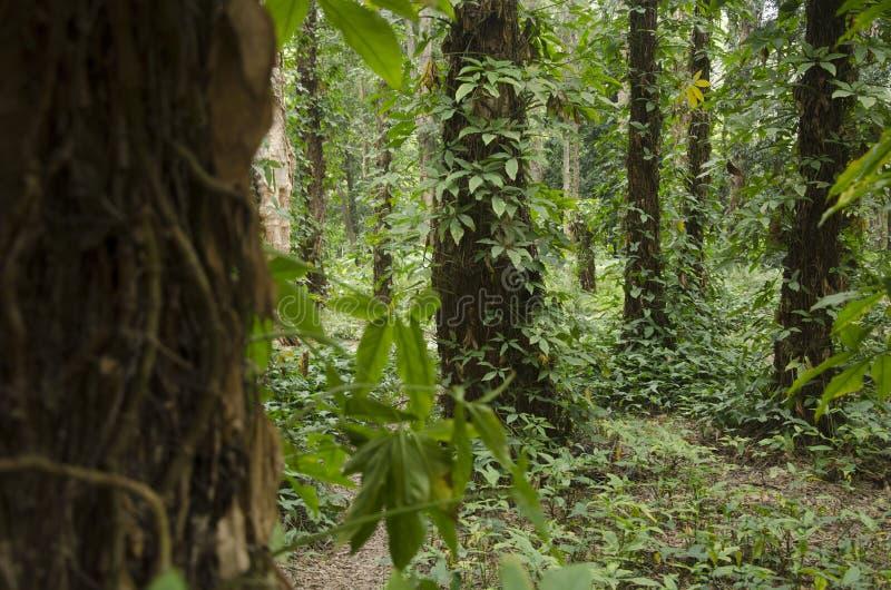 树在森林里 免版税库存照片