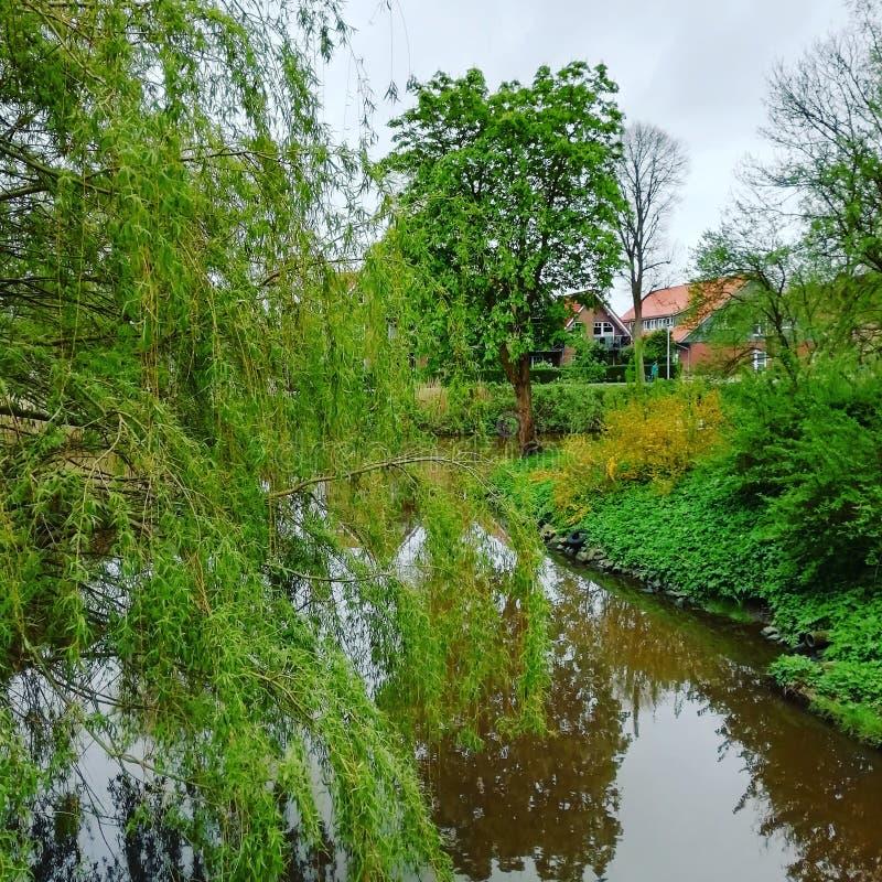 树在水中 免版税库存图片