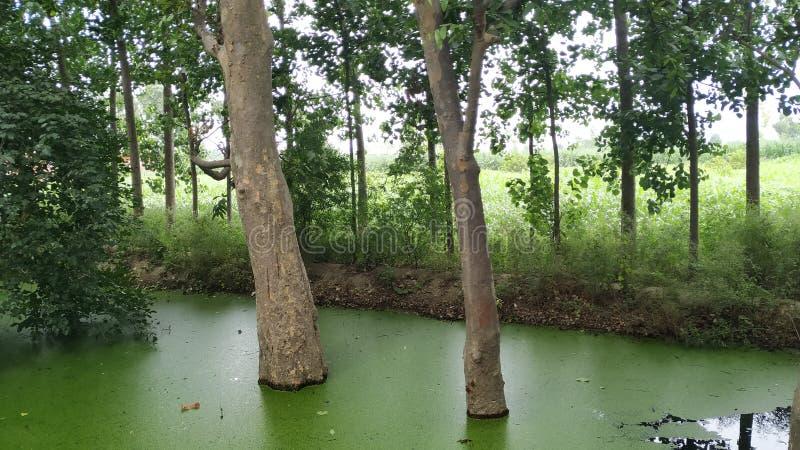 树在水采伐的情况下在下雨以后 免版税库存照片