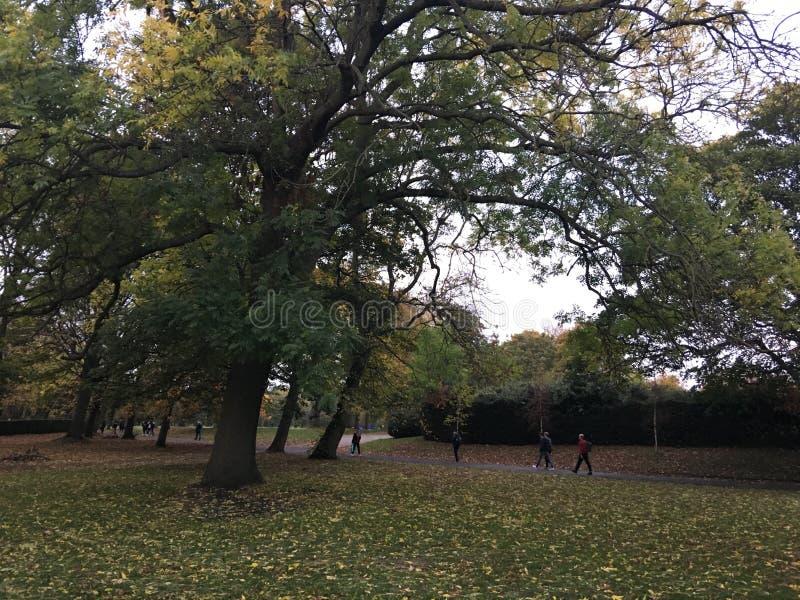 树在海德公园,利兹,英国 库存图片