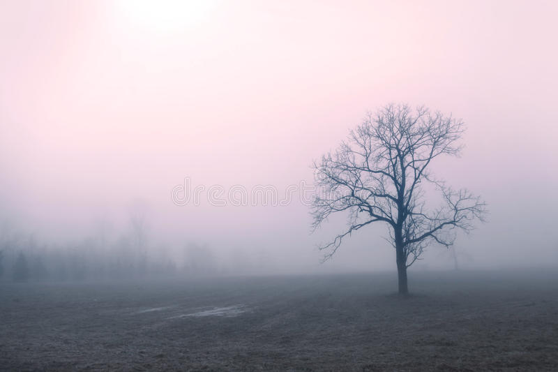 树在清早追上了 免版税库存图片