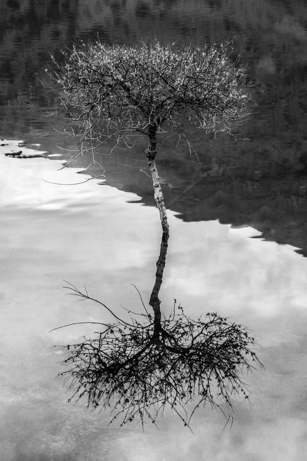 树在湖 免版税库存图片