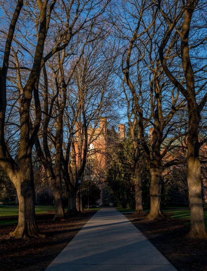 树在爱达荷大学盖了走道 免版税库存照片
