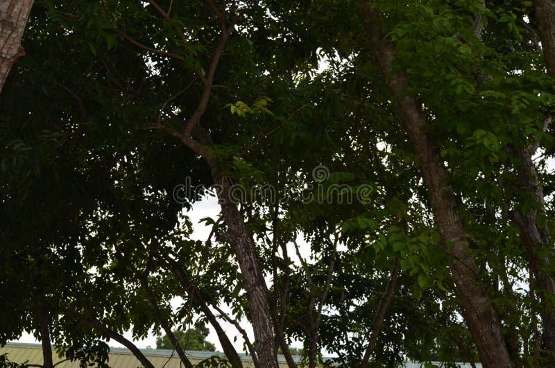 树在白天 库存照片