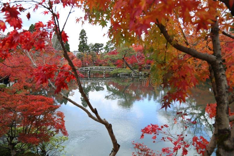 树在秋天在日本 免版税库存图片