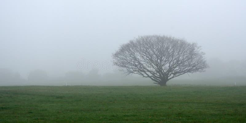 树在草甸在有雾的天 库存照片