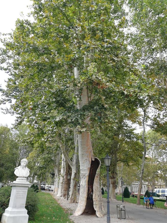 树在萨格勒布 库存照片