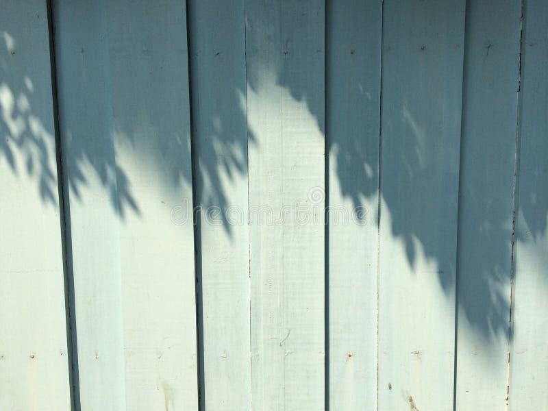 树在蓝色墙壁上遮蔽 库存照片