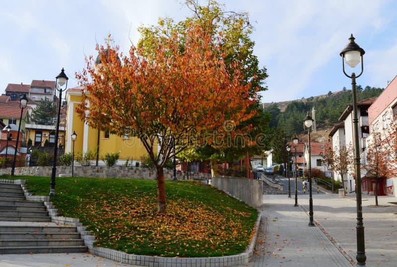 树在街道上的秋天 库存照片
