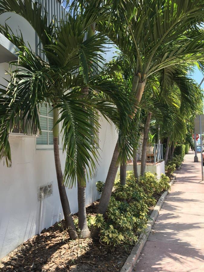 树在迈阿密,佛罗里达 图库摄影
