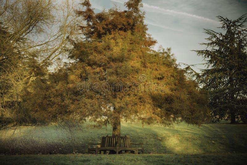 树在金黄小时在公园,天空在背景中 免版税库存照片