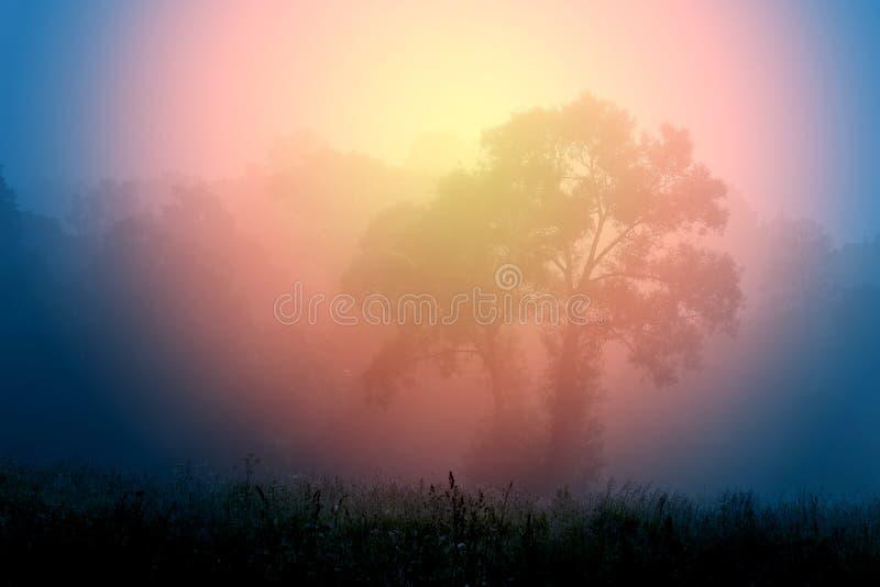 树在雾站立 免版税库存照片
