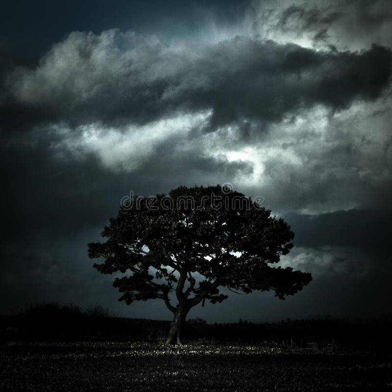 树在风雨如磐的天空下, Oswestry,萨罗普郡,英国 库存照片
