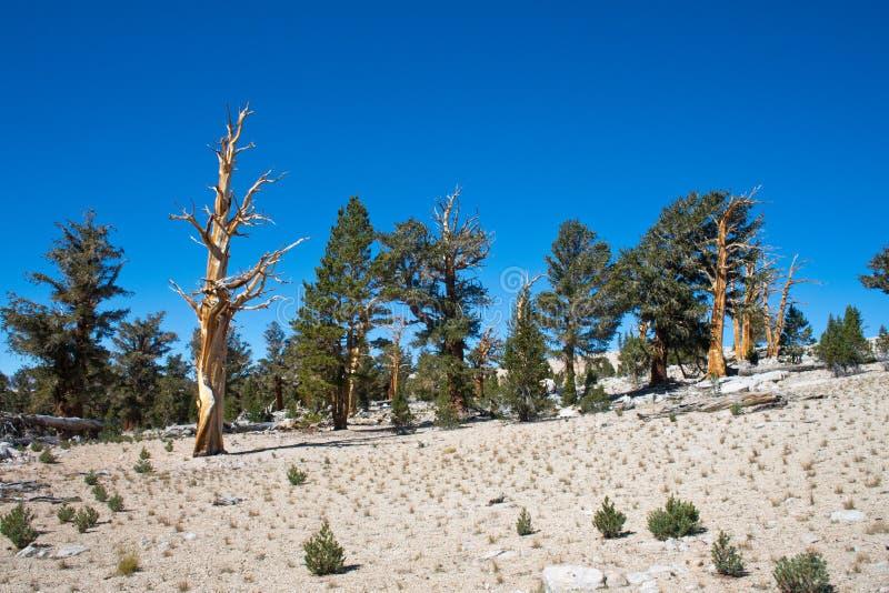 树在高山脉山 免版税库存照片