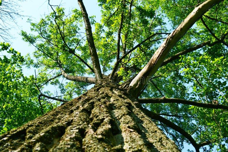 树在从在底下的公园 免版税库存图片