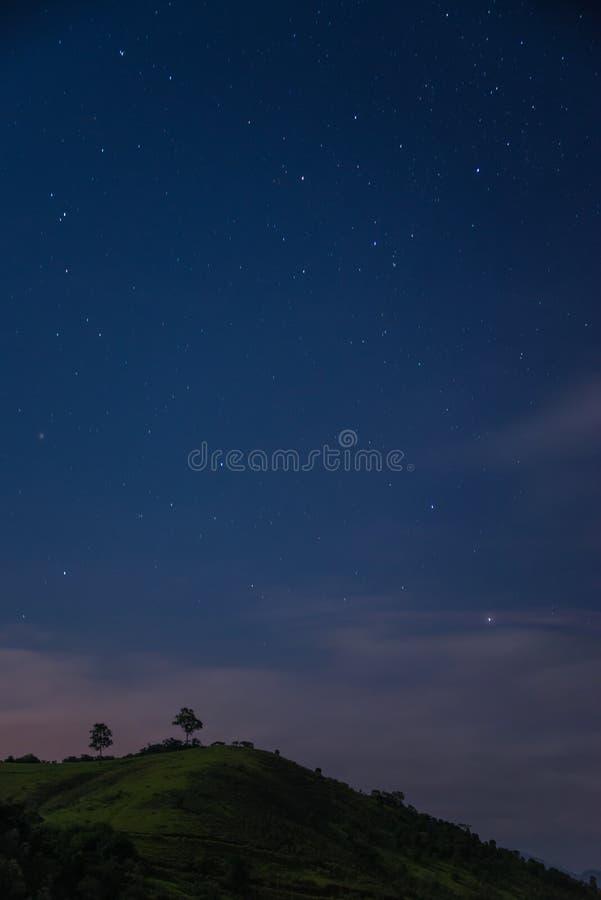 树在满天星斗的天空下 免版税库存照片