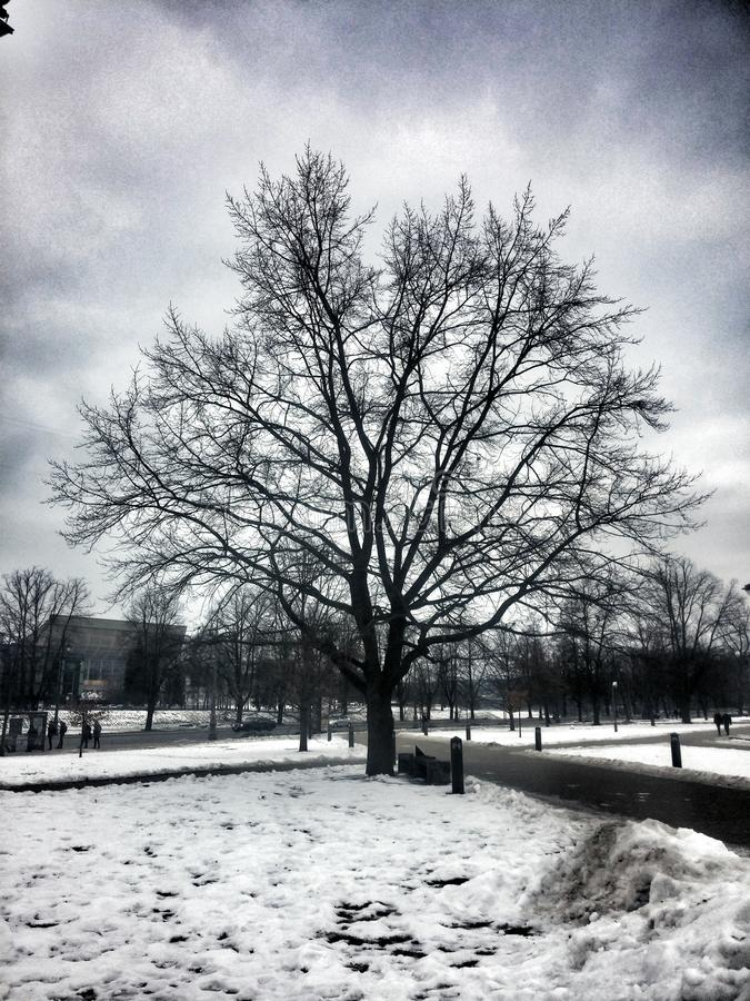 树在维尔纽斯 库存图片