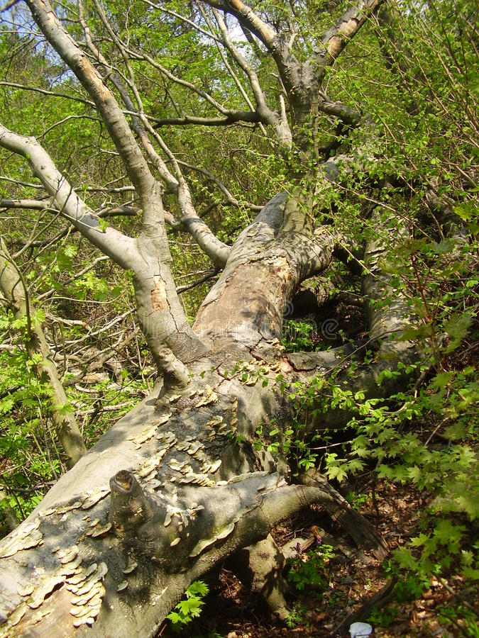 树在绿色森林里 库存照片