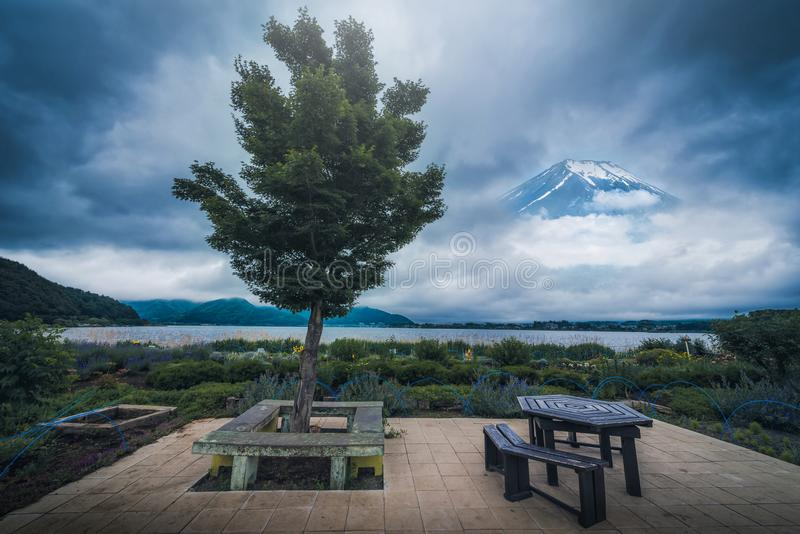 树在kawaguchiko湖附近的庭院里有Mt峰顶的  富士b 库存照片