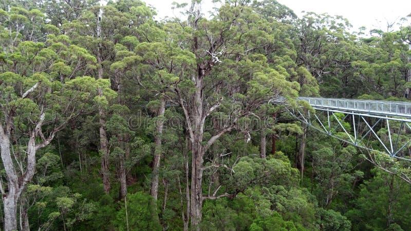 树在Walpole西澳州在秋天冠上走道 库存图片