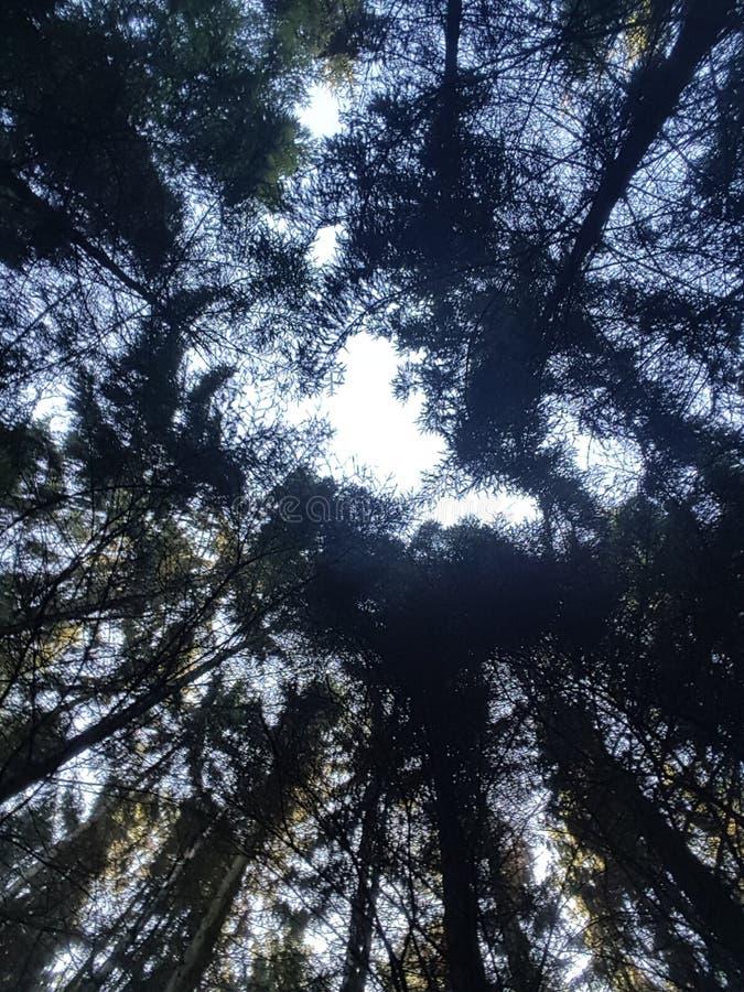 树型视图 库存照片